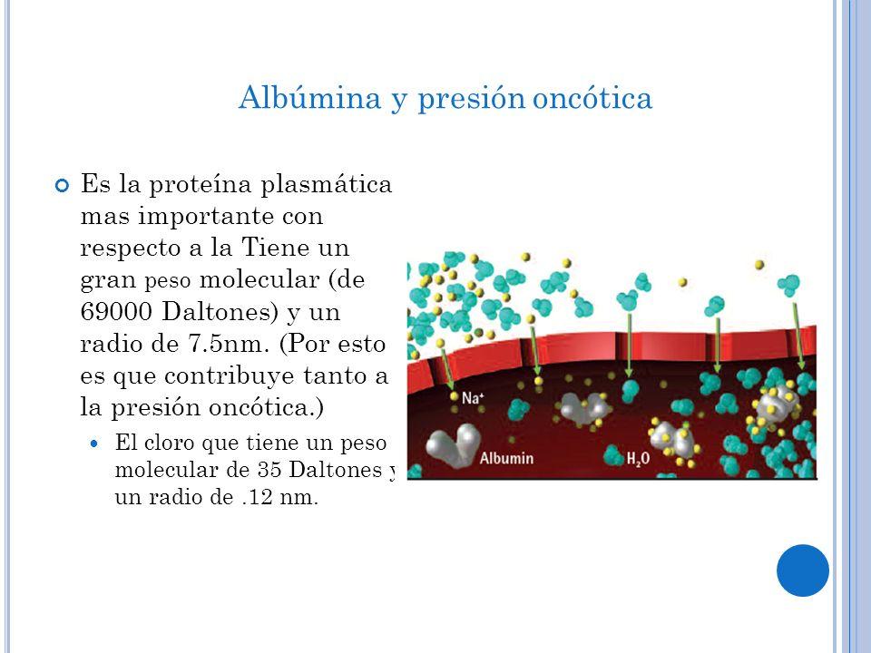 I MPORTANCIA CLÍNICA La albumina crea un 75-85% de la presión oncótica.