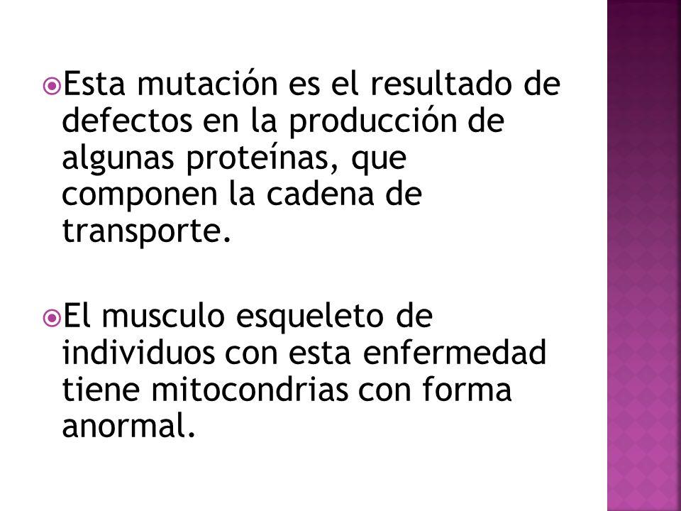 Esta mutación es el resultado de defectos en la producción de algunas proteínas, que componen la cadena de transporte. El musculo esqueleto de individ