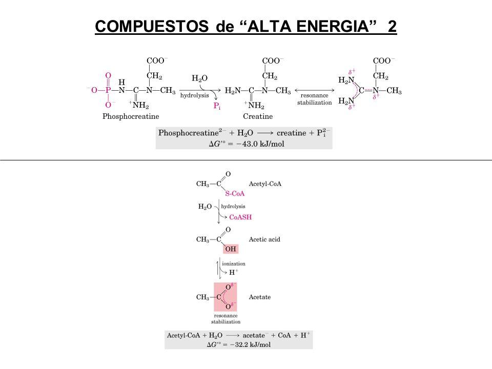COMPUESTOS de ALTA ENERGIA 2