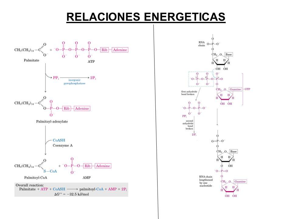 RELACIONES ENERGETICAS