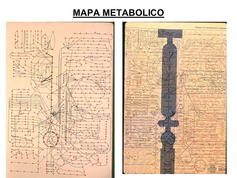 MAPA METABOLICO