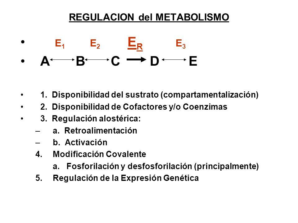 REGULACION del METABOLISMO E 1 E 2 E R E 3 A B C D E 1. Disponibilidad del sustrato (compartamentalización) 2. Disponibilidad de Cofactores y/o Coenzi