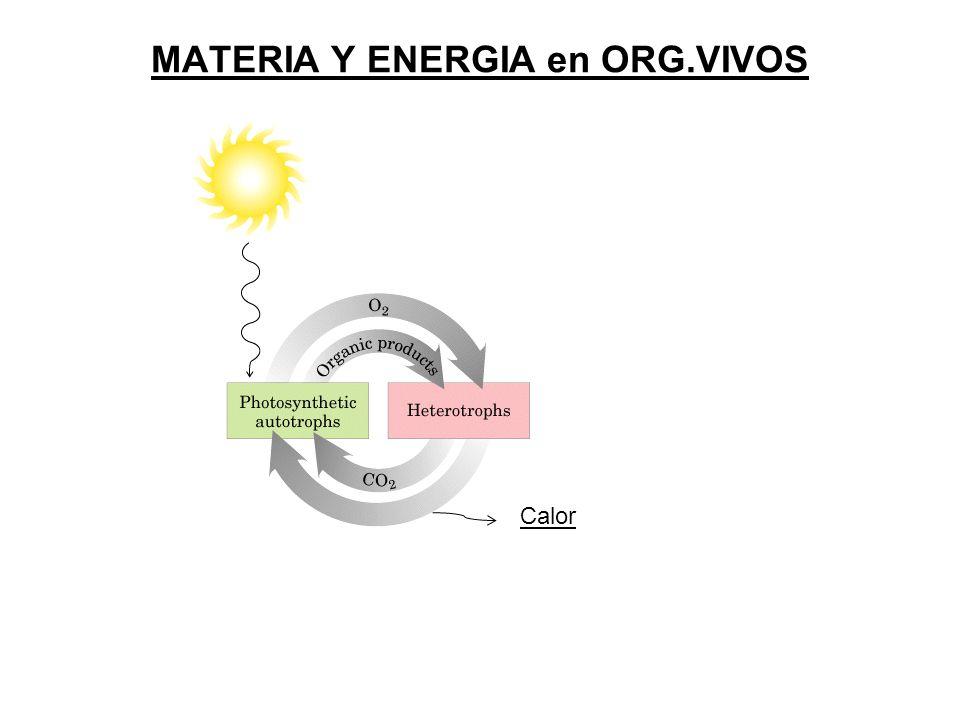 MATERIA Y ENERGIA en ORG.VIVOS Calor