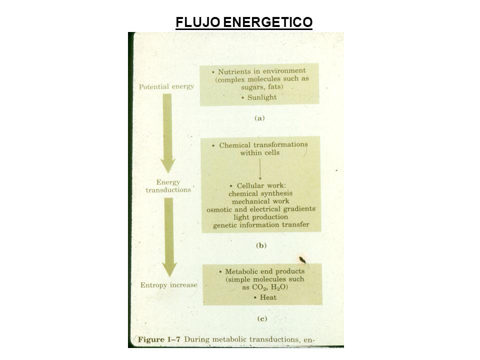 FLUJO ENERGETICO