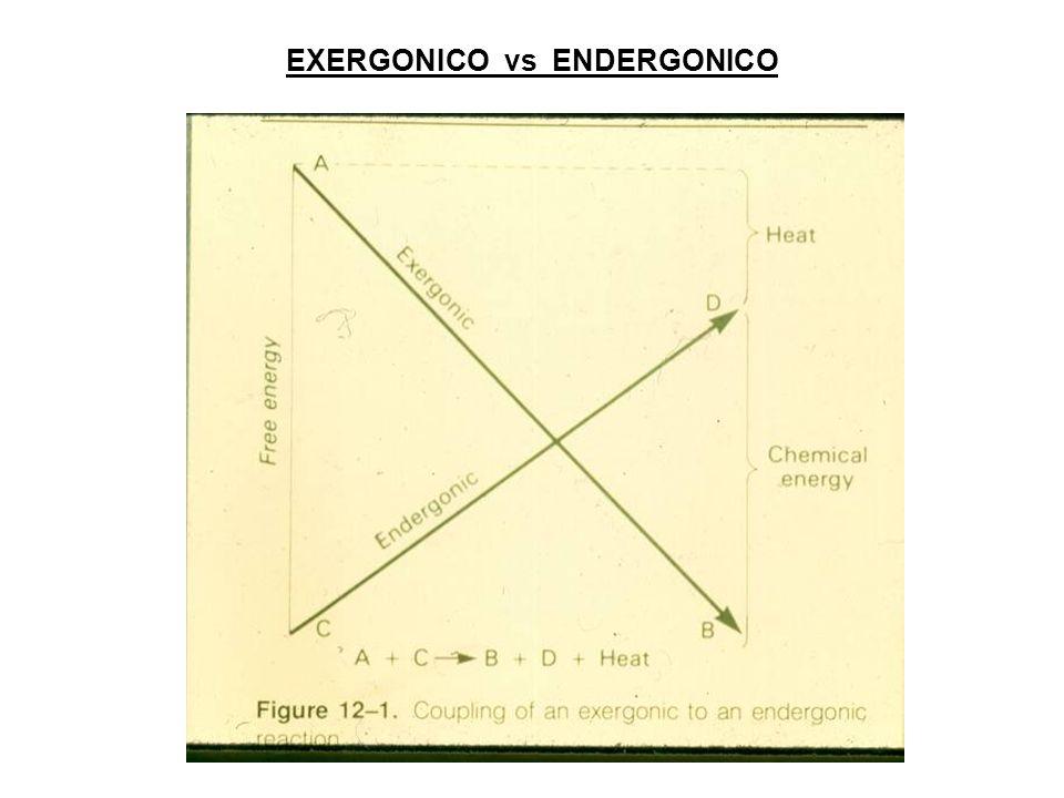 EXERGONICO vs ENDERGONICO