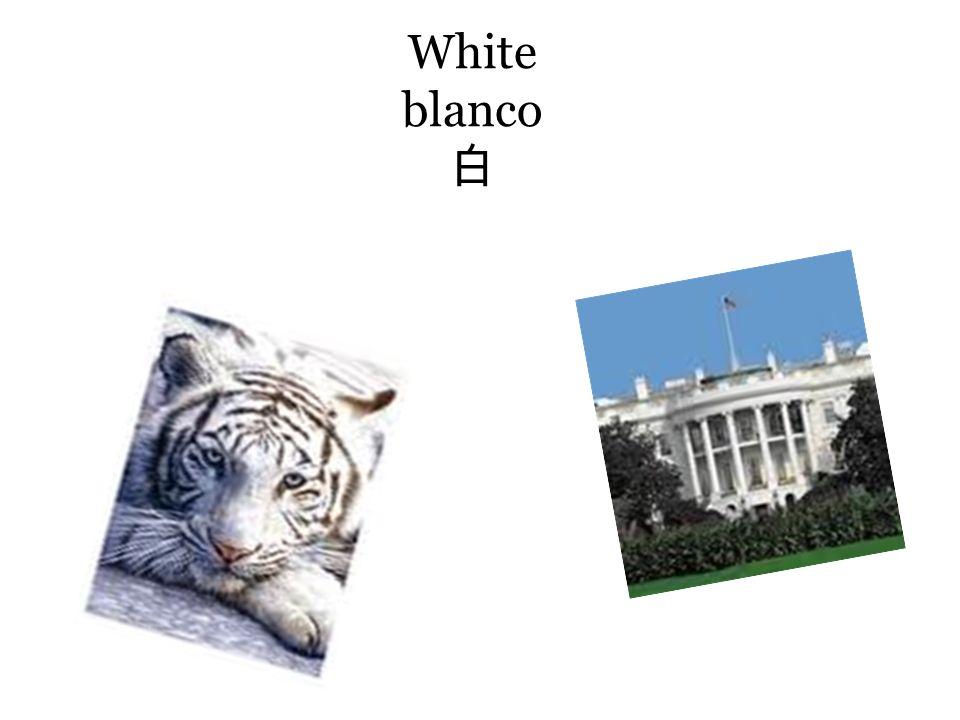 White blanco White blanco