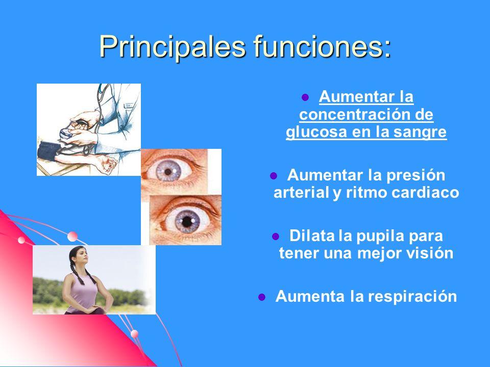 Principales funciones: Aumentar la concentración de glucosa en la sangre Aumentar la presión arterial y ritmo cardiaco Dilata la pupila para tener una