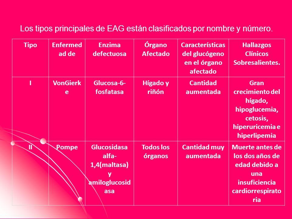 Los tipos principales de EAG están clasificados por nombre y número. TipoEnfermed ad de Enzima defectuosa Órgano Afectado Características del glucógen