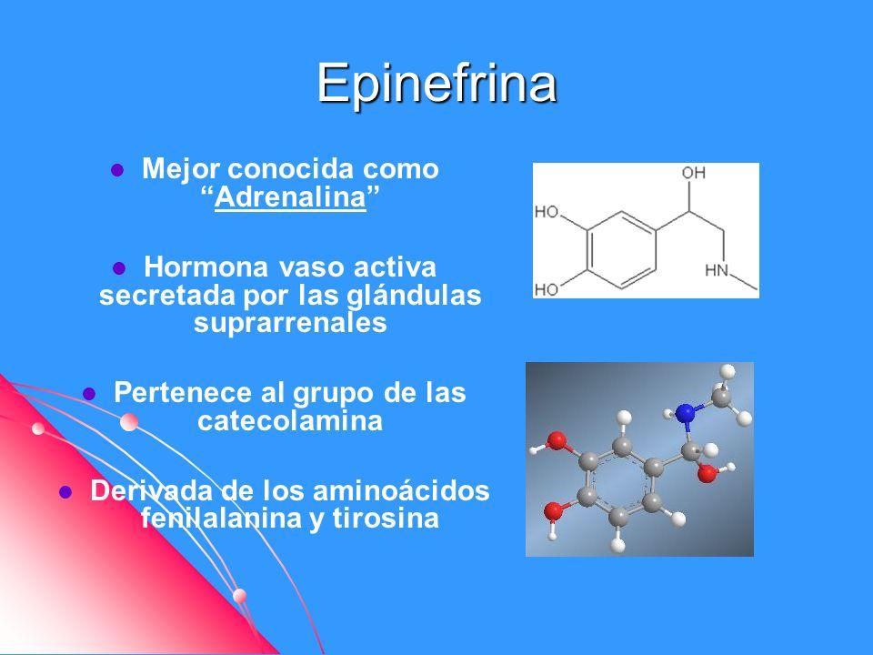 Epinefrina Mejor conocida comoAdrenalina Hormona vaso activa secretada por las glándulas suprarrenales Pertenece al grupo de las catecolamina Derivada