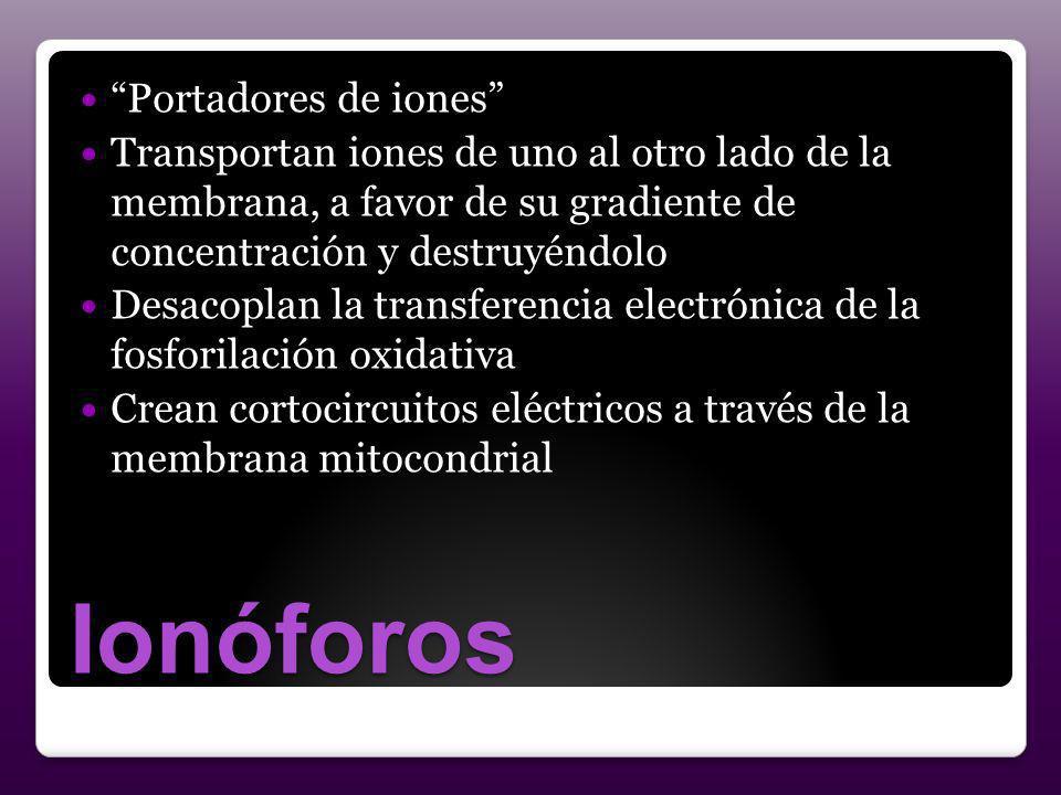 Ionóforos Portadores de iones Transportan iones de uno al otro lado de la membrana, a favor de su gradiente de concentración y destruyéndolo Desacopla