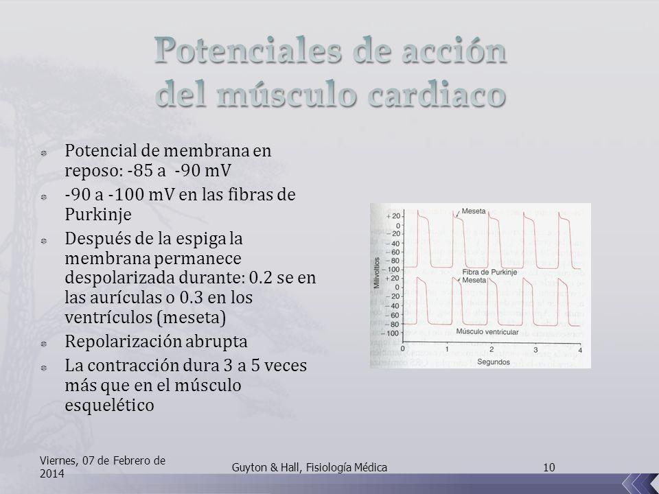 Potencial de membrana en reposo: -85 a -90 mV -90 a -100 mV en las fibras de Purkinje Después de la espiga la membrana permanece despolarizada durante: 0.2 se en las aurículas o 0.3 en los ventrículos (meseta) Repolarización abrupta La contracción dura 3 a 5 veces más que en el músculo esquelético Viernes, 07 de Febrero de 2014 10Guyton & Hall, Fisiología Médica