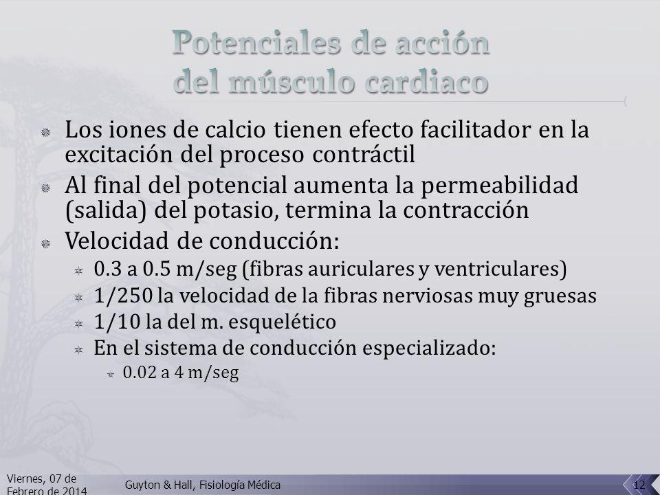 Los iones de calcio tienen efecto facilitador en la excitación del proceso contráctil Al final del potencial aumenta la permeabilidad (salida) del potasio, termina la contracción Velocidad de conducción: 0.3 a 0.5 m/seg (fibras auriculares y ventriculares) 1/250 la velocidad de la fibras nerviosas muy gruesas 1/10 la del m.