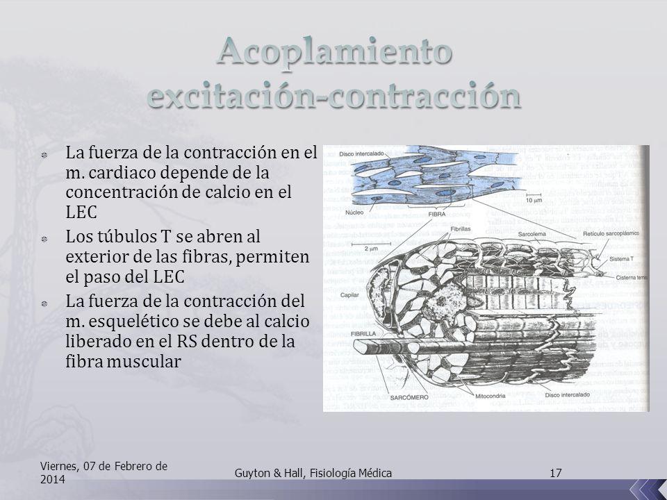 La fuerza de la contracción en el m.