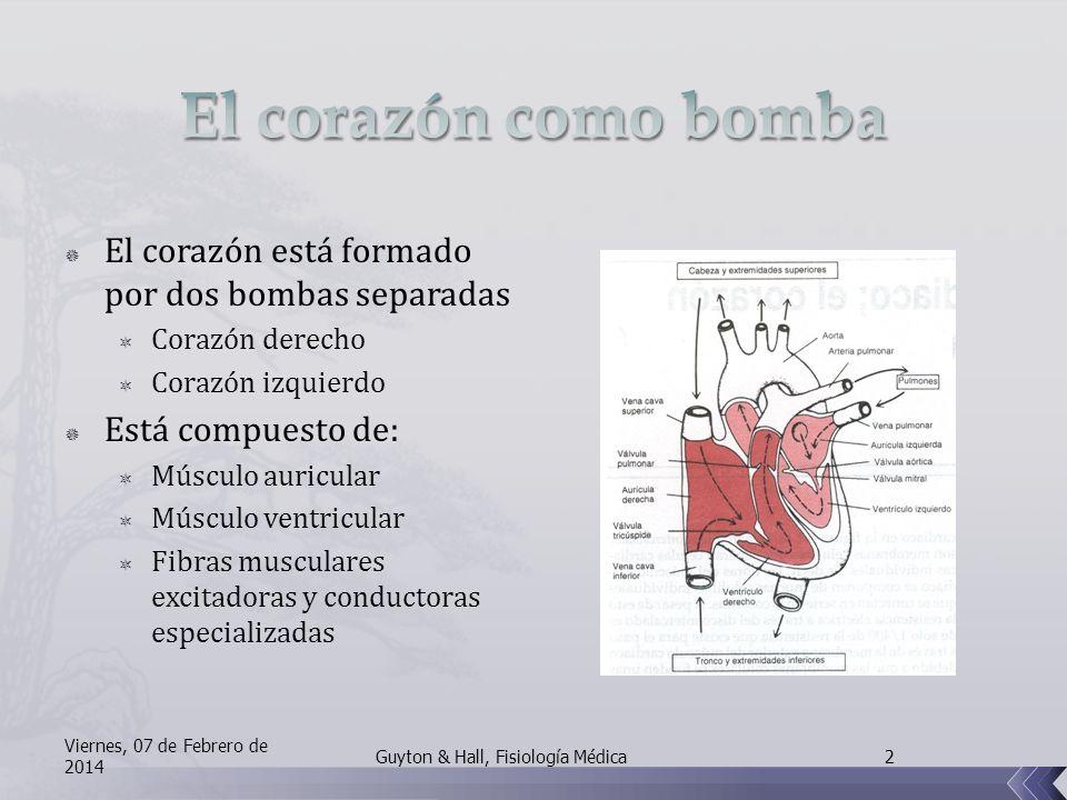 El corazón está formado por dos bombas separadas Corazón derecho Corazón izquierdo Está compuesto de: Músculo auricular Músculo ventricular Fibras musculares excitadoras y conductoras especializadas Viernes, 07 de Febrero de 2014 2Guyton & Hall, Fisiología Médica