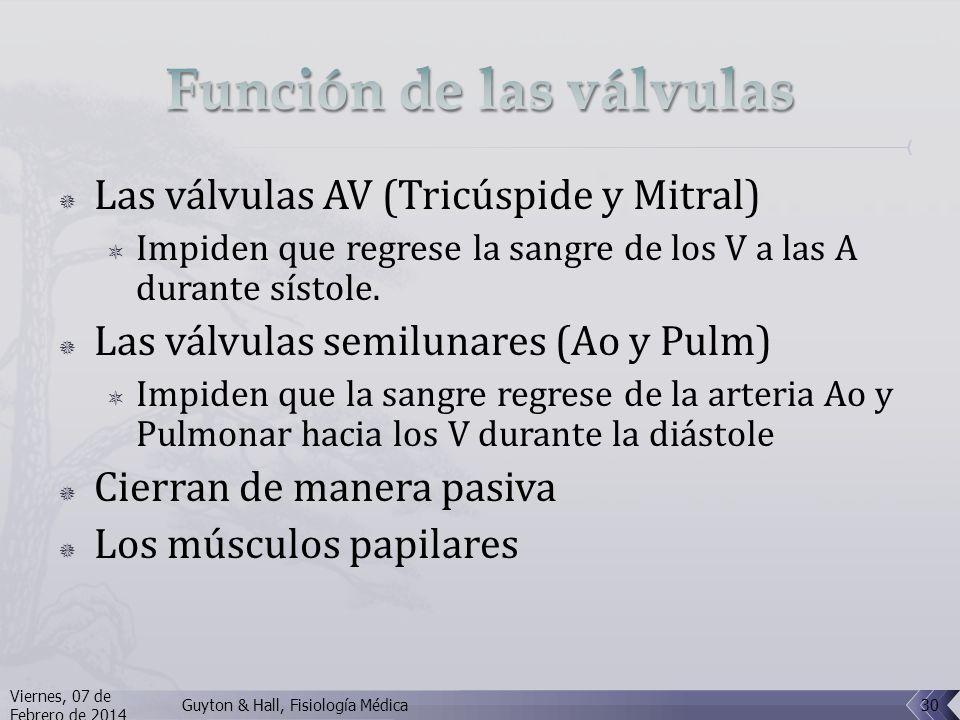 Las válvulas AV (Tricúspide y Mitral) Impiden que regrese la sangre de los V a las A durante sístole.