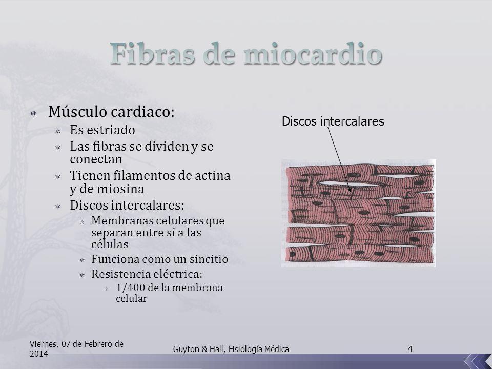 Músculo cardiaco: Es estriado Las fibras se dividen y se conectan Tienen filamentos de actina y de miosina Discos intercalares: Membranas celulares que separan entre sí a las células Funciona como un sincitio Resistencia eléctrica: 1/400 de la membrana celular Discos intercalares Viernes, 07 de Febrero de 2014 4Guyton & Hall, Fisiología Médica