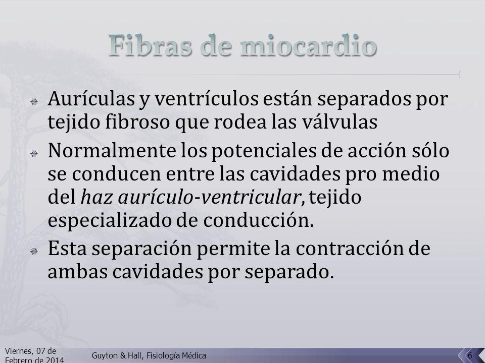 Aurículas y ventrículos están separados por tejido fibroso que rodea las válvulas Normalmente los potenciales de acción sólo se conducen entre las cavidades pro medio del haz aurículo-ventricular, tejido especializado de conducción.
