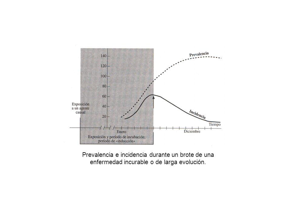 Prevalencia e incidencia durante un brote de una enfermedad incurable o de larga evolución.