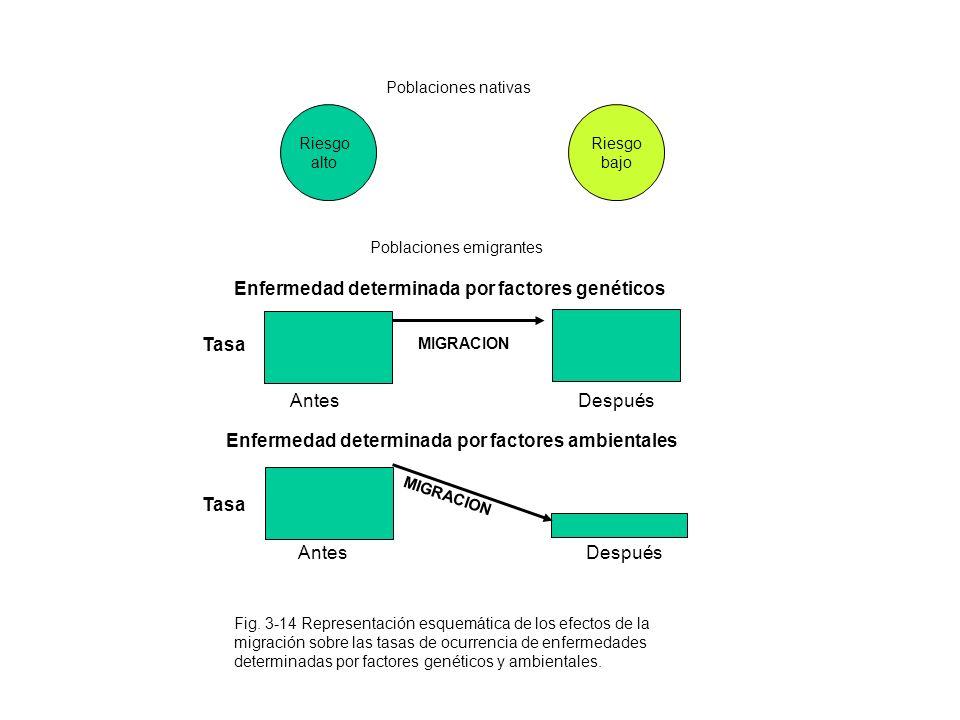 Riesgo alto Riesgo bajo Fig. 3-14 Representación esquemática de los efectos de la migración sobre las tasas de ocurrencia de enfermedades determinadas
