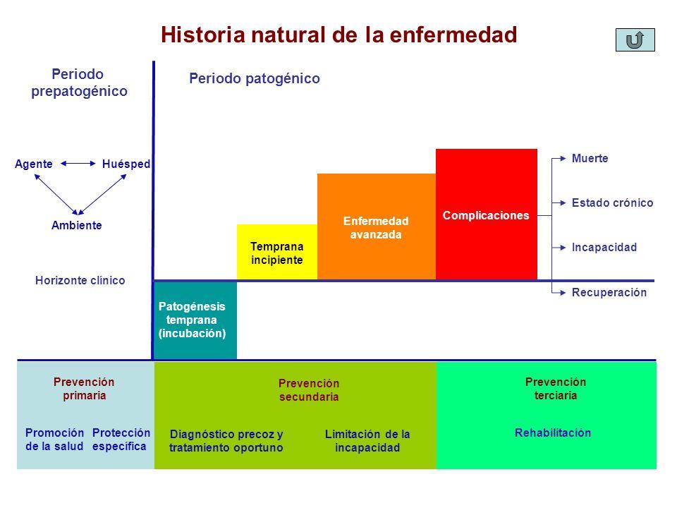 Historia natural de la enfermedad Periodo prepatogénico Patogénesis temprana (incubación) Temprana incipiente Enfermedad avanzada Complicaciones Muert