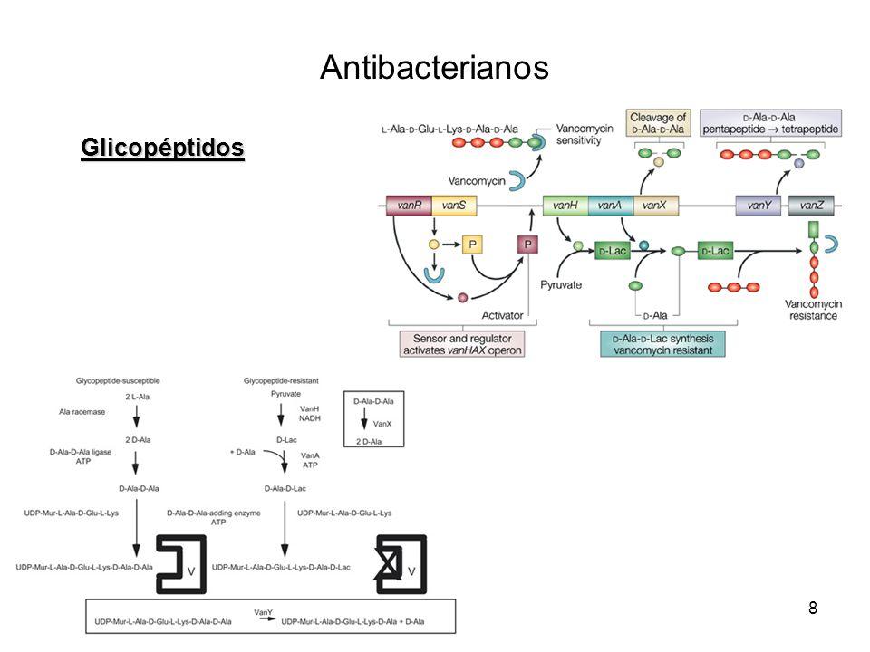 8 Glicopéptidos