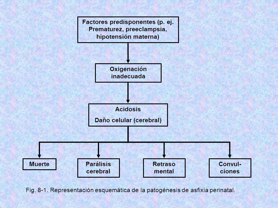Factores predisponentes (p. ej. Prematurez, preeclampsia, hipotensión materna) Oxigenación inadecuada Acidosis Daño celular (cerebral) MuerteParálisis