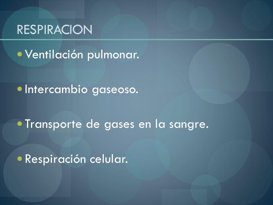 RESPIRACION Ventilación pulmonar. Intercambio gaseoso. Transporte de gases en la sangre. Respiración celular.