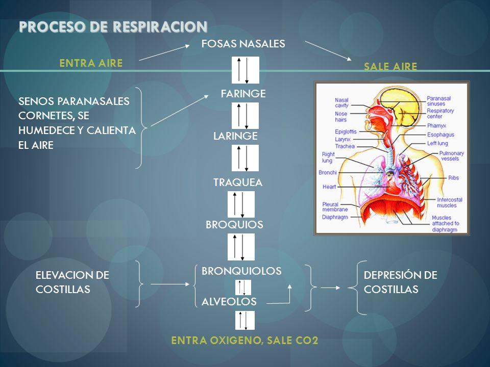 PROCESO DE RESPIRACION ENTRA AIRE SALE AIRE FOSAS NASALES FARINGE LARINGE TRAQUEA BROQUIOS BRONQUIOLOS ALVEOLOS ENTRA OXIGENO, SALE CO2 ELEVACION DE C