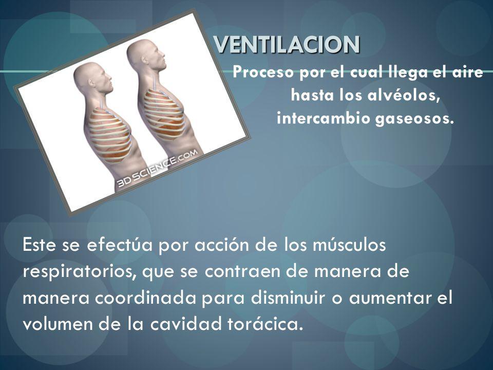 VENTILACION Proceso por el cual llega el aire hasta los alvéolos, intercambio gaseosos. Este se efectúa por acción de los músculos respiratorios, que