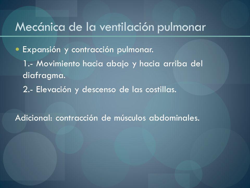 Mecánica de la ventilación pulmonar Expansión y contracción pulmonar. 1.- Movimiento hacia abajo y hacia arriba del diafragma. 2.- Elevación y descens