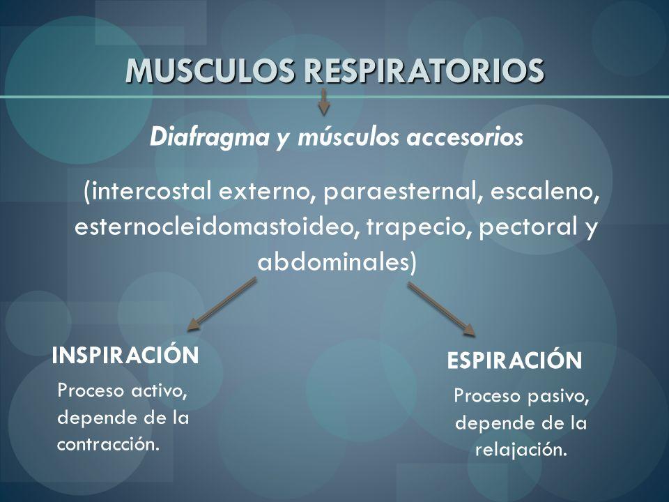 MUSCULOS RESPIRATORIOS Diafragma y músculos accesorios (intercostal externo, paraesternal, escaleno, esternocleidomastoideo, trapecio, pectoral y abdo