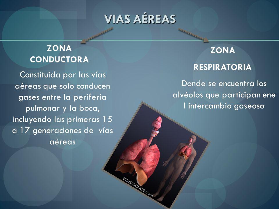 VIAS AÉREAS ZONA CONDUCTORA ZONA RESPIRATORIA Constituida por las vías aéreas que solo conducen gases entre la periferia pulmonar y la boca, incluyend