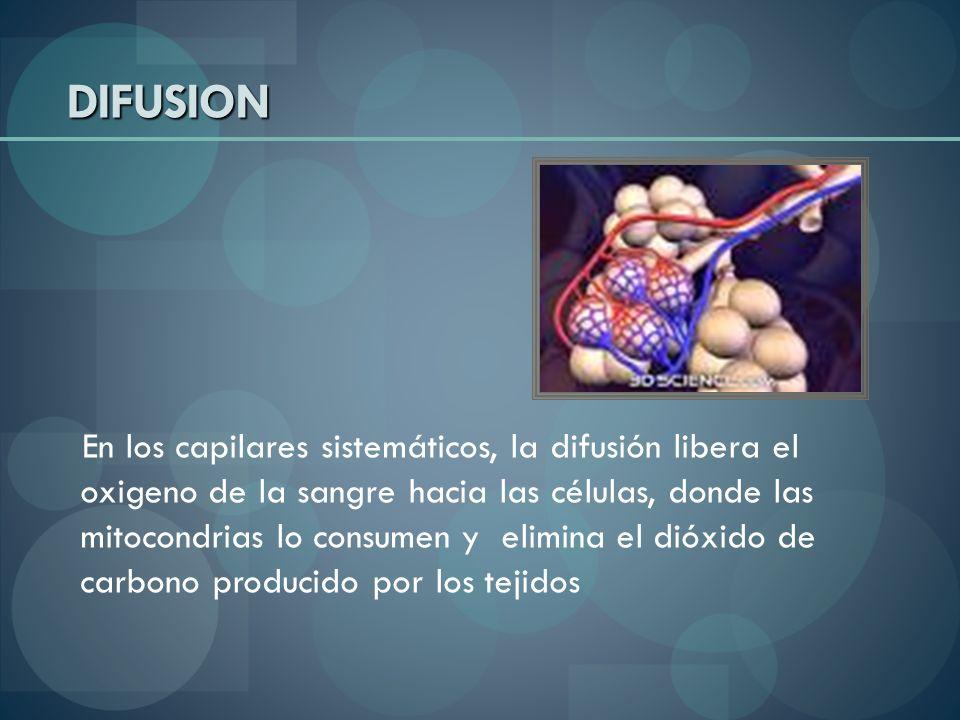 DIFUSION En los capilares sistemáticos, la difusión libera el oxigeno de la sangre hacia las células, donde las mitocondrias lo consumen y elimina el