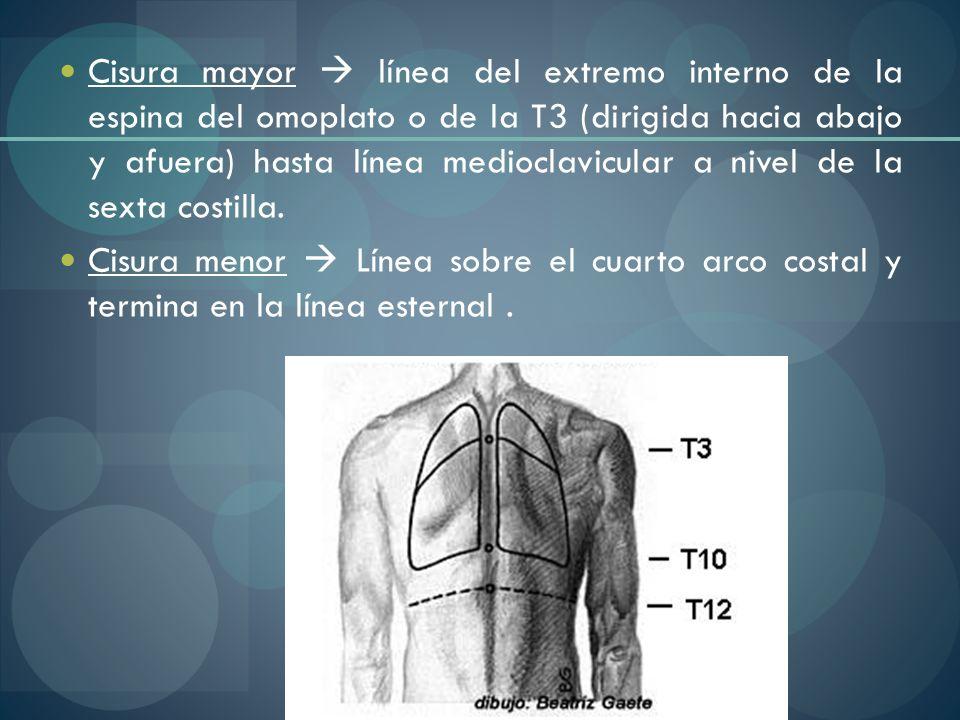 Cisura mayor línea del extremo interno de la espina del omoplato o de la T3 (dirigida hacia abajo y afuera) hasta línea medioclavicular a nivel de la