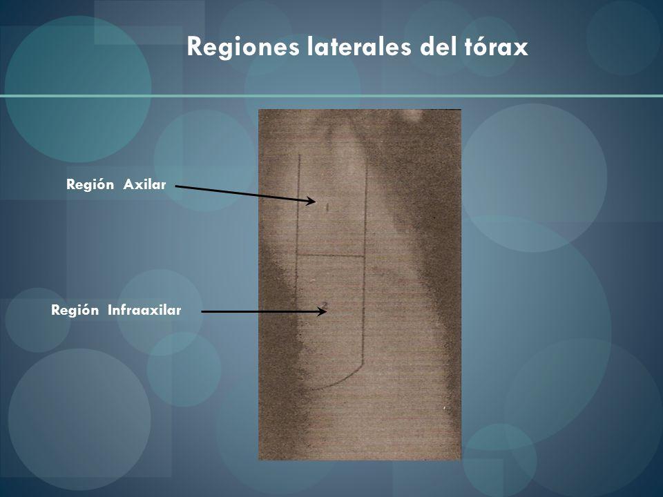 Región Axilar Regiones laterales del tórax Región Infraaxilar