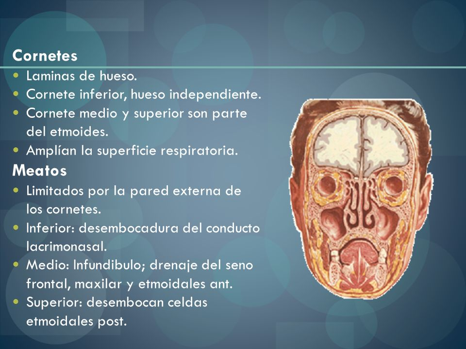 Mucosa Olfativa: 1/3 superior Respiratoria: 2/3 inferiores, productora de moco, rica en elementos vasculares.