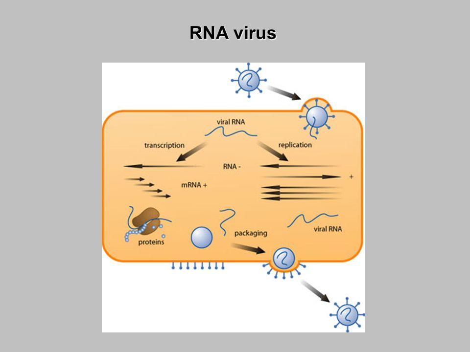 Retrovirus (RNA, TR)