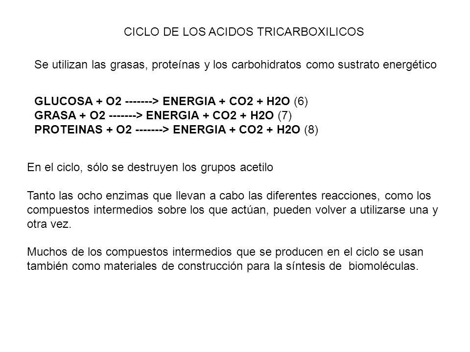 CICLO DE LOS ACIDOS TRICARBOXILICOS Se utilizan las grasas, proteínas y los carbohidratos como sustrato energético En el ciclo, sólo se destruyen los