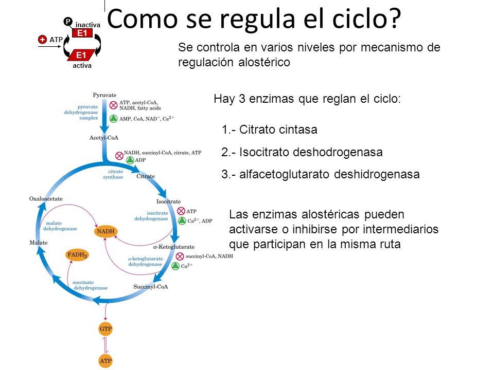 ¿Como se regula el ciclo? Se controla en varios niveles por mecanismo de regulación alostérico Hay 3 enzimas que reglan el ciclo: 1.- Citrato cintasa