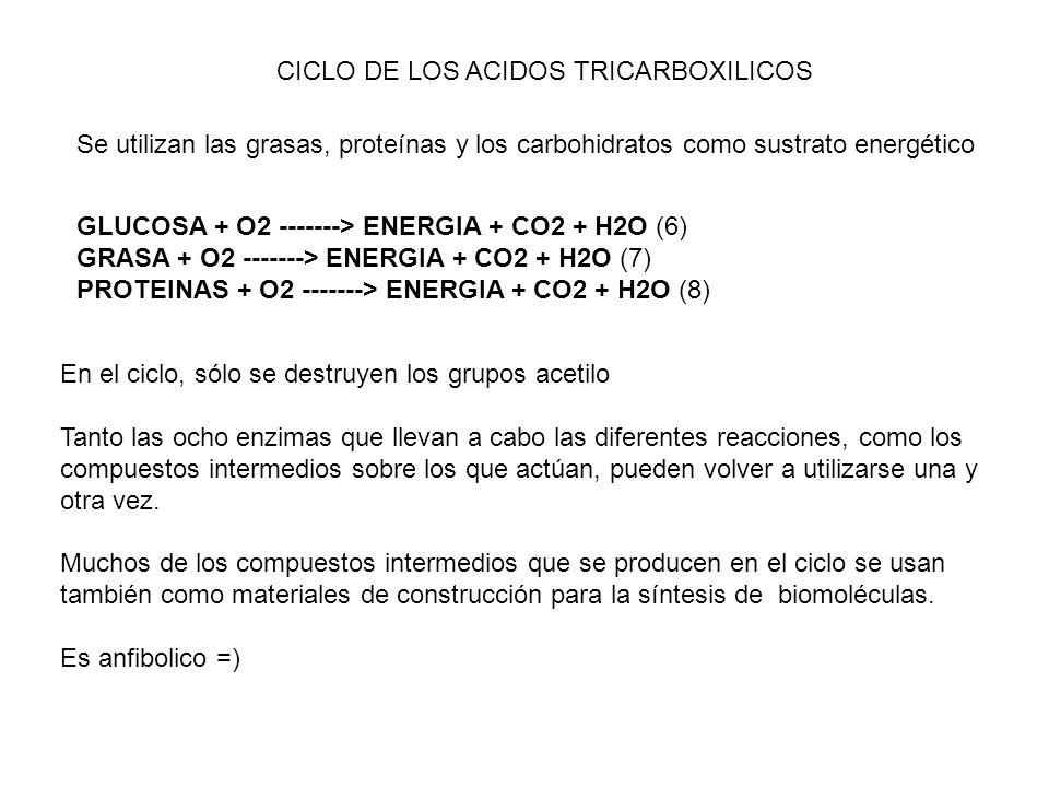 Enzimas catapleróticas 1.- Deshidrogenasa de glutamato 2.- Transferasa aspártica 3.- Liasa cítrica 4.