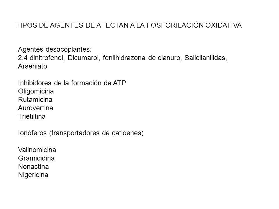 TIPOS DE AGENTES DE AFECTAN A LA FOSFORILACIÓN OXIDATIVA Agentes desacoplantes: 2,4 dinitrofenol, Dicumarol, fenilhidrazona de cianuro, Salicilanilida