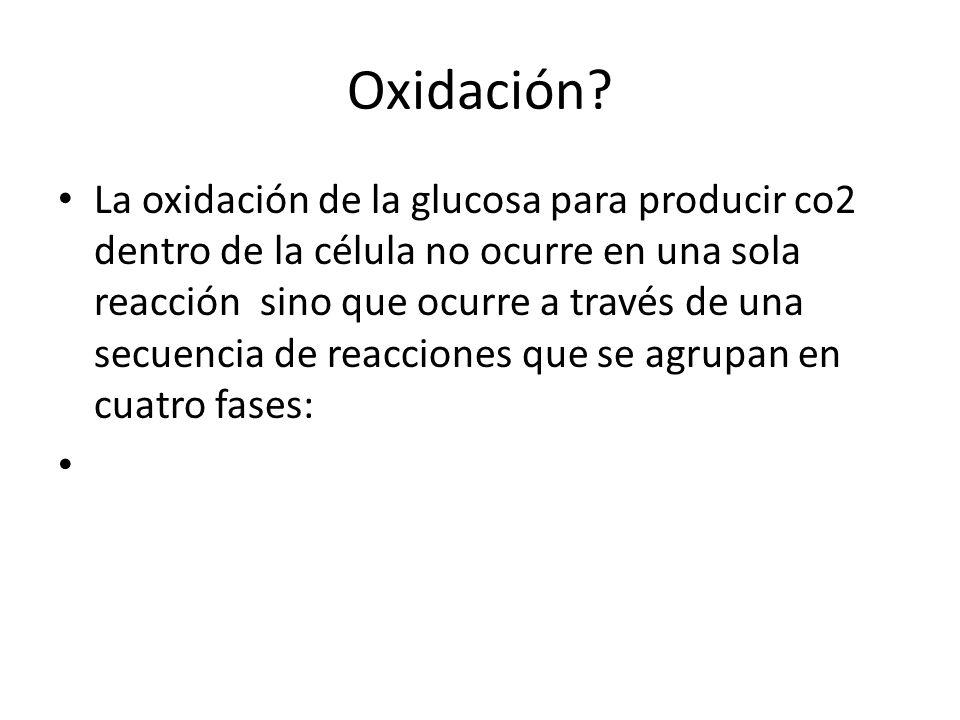 Oxidación? La oxidación de la glucosa para producir co2 dentro de la célula no ocurre en una sola reacción sino que ocurre a través de una secuencia d