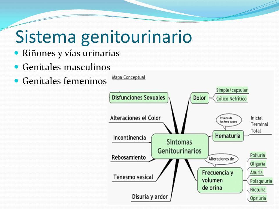 Sistema genitourinario Riñones y vías urinarias Genitales masculinos Genitales femeninos