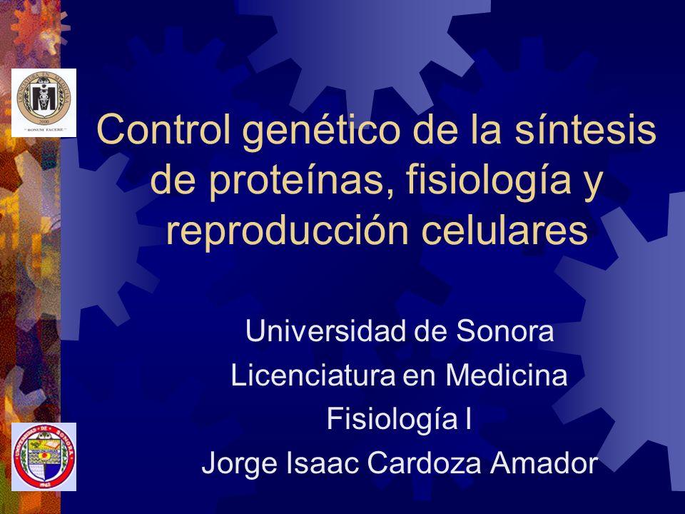 Control genético de la célula Los genes: Regulan la herencia Controlan la reproducción Regulan las funciones celulares