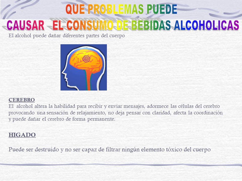 El alcohol puede dañar diferentes partes del cuerpoCEREBRO El alcohol altera la habilidad para recibir y enviar mensajes, adormece las células del cer