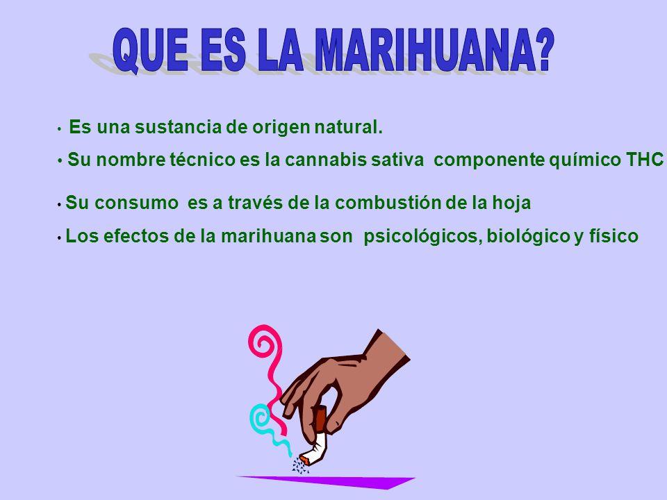 Es una sustancia de origen natural. Su nombre técnico es la cannabis sativa componente químico THC Su consumo es a través de la combustión de la hoja