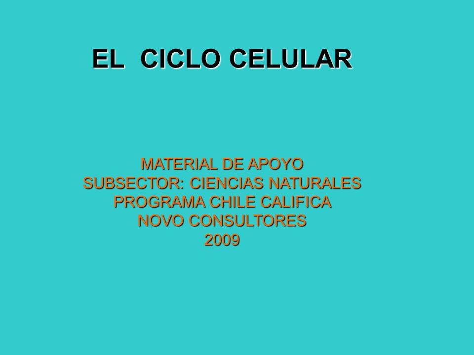 El ciclo celular es el proceso ordenado y repetitivo en el tiempo mediante el cual las células crecen y se divide dando lugar, en la mayoría de los casos, a dos células hijas.