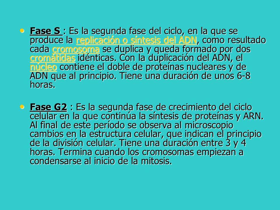Profase I: La profase I de la primera división meiótica es la etapa más compleja del proceso y a su vez se divide en 5 subetapas, que son: La profase I de la primera división meiótica es la etapa más compleja del proceso y a su vez se divide en 5 subetapas, que son: 1.