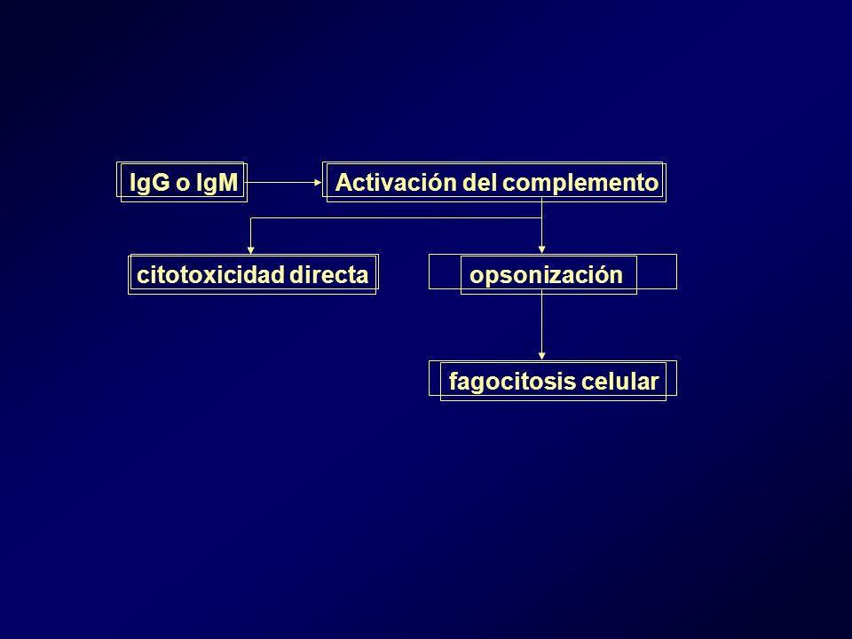 IgG o IgMActivación del complemento opsonización fagocitosis celular citotoxicidad directa