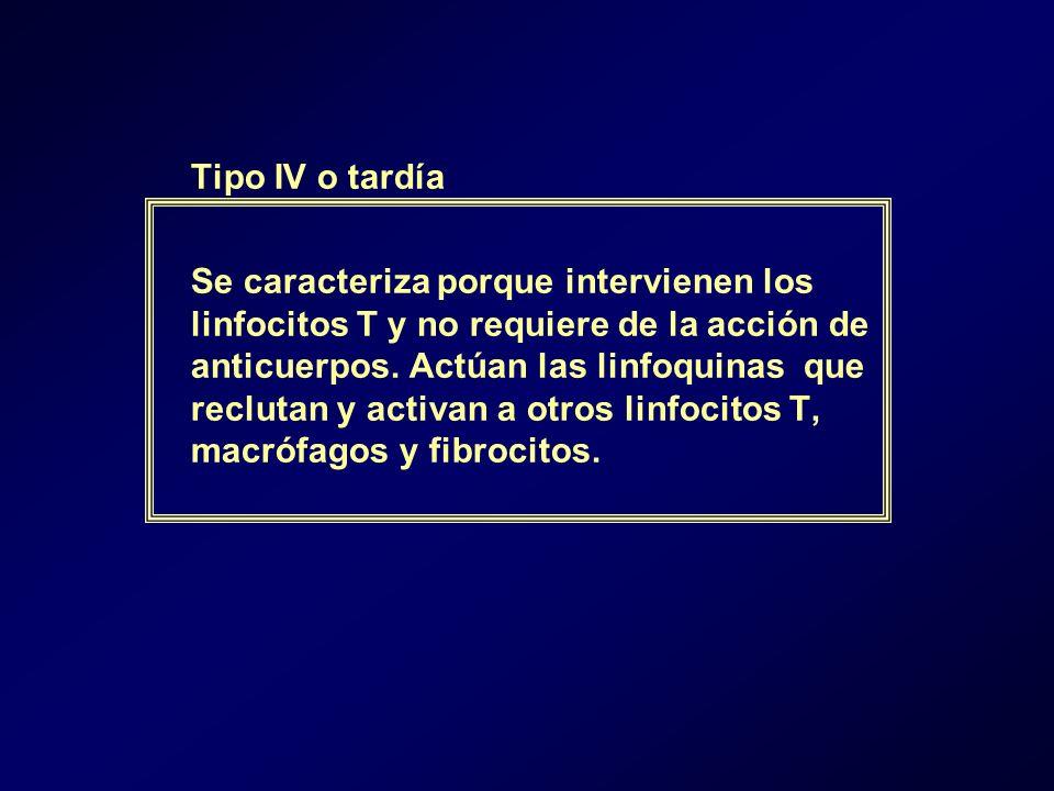 Tipo IV o tardía Se caracteriza porque intervienen los linfocitos T y no requiere de la acción de anticuerpos. Actúan las linfoquinas que reclutan y a